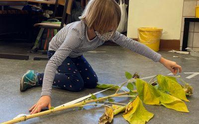 Wir messen Sonnenblumen